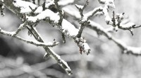 Following is a weather message from the Burnaby School District:Burnaby Schools remain open today, February 23, 2018. Parents & Guardians are welcome to pick up their children early today, before […]